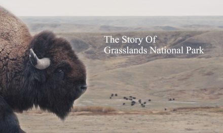 The Story Of Grasslands National Park