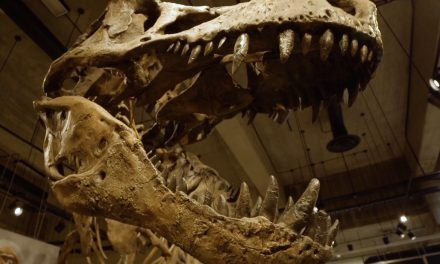 Scotty The T.rex – The Full Story